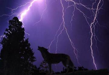 lightning%20wolf%20small.JPG